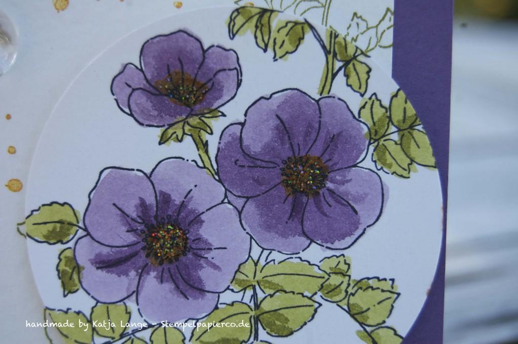 Glückwunschkarte mit Sweetbriar Rose und Aquapaintern von Stampin' Up!2